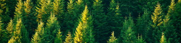 Healthy_Forests_Header